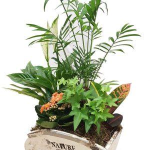 Carretilla con plantas