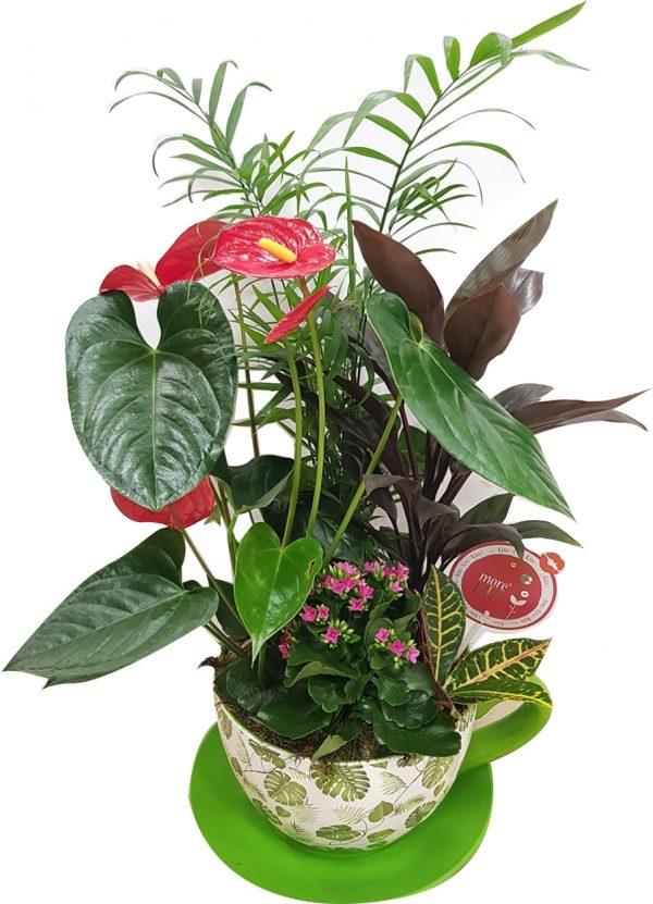 Taza grande con plantas