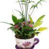 Taza con plantas