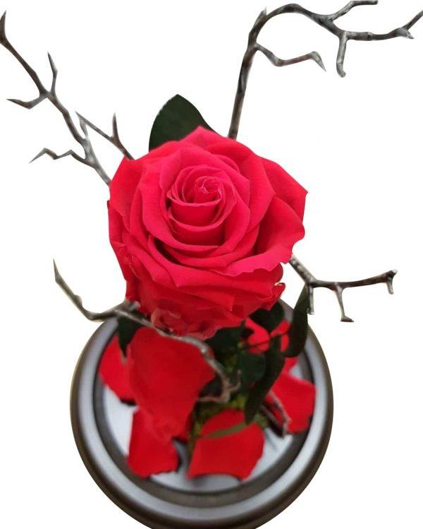 Rosa eterna roja
