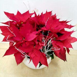 Composición con flor de pascua