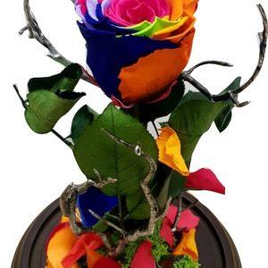 Rosa eterna de colores