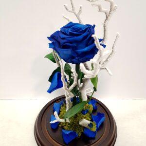 rosa azul liofilizada