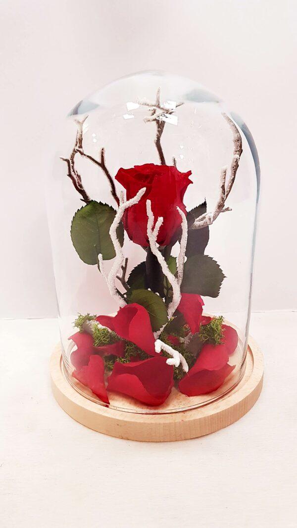 Rosa eterna con ramita nevada