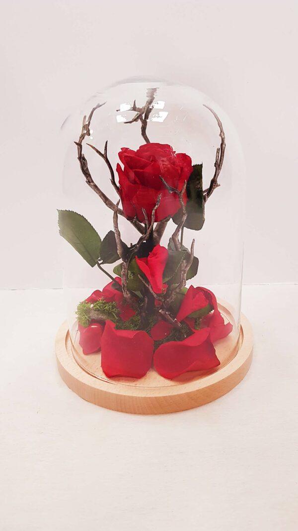 rosa liofilizada
