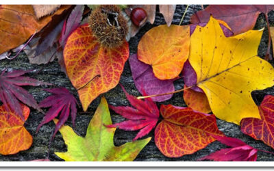 Cuidados de las plantas en otoño