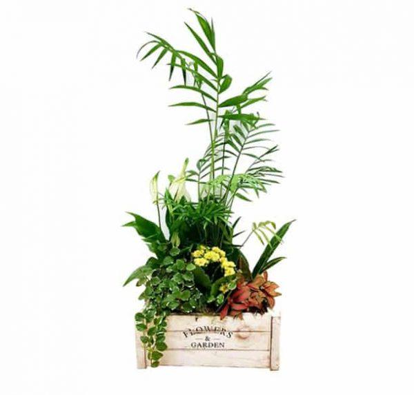 Caja con Plantas