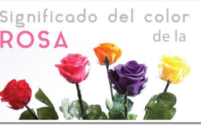 Significado del color de la rosa